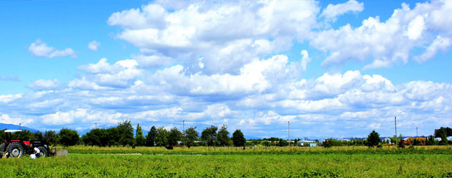 Farm Land in Richmond BC